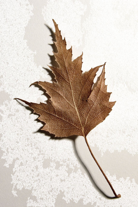 Fall Waits